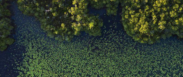 Hutan bakau purba ditemukan tersembunyi di Sekitar Semenanjung Yucatán Meksiko